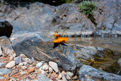 Butterflies holding on the rock with waterfall background Royalty Free Stock Images