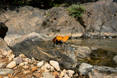 Butterflies holding on the rock with waterfall background Stock Photos