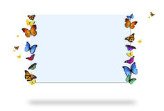 Butterflies holding sign Stock Images