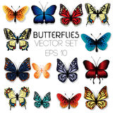 Butterflies illustration set. Colorful butterflies set isolated on white Royalty Free Stock Photography
