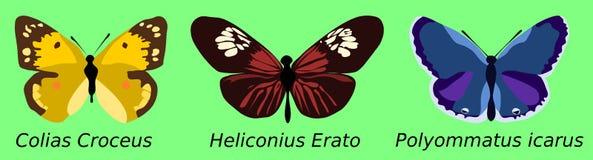 3 butterflies. Illustration of three butterflies on green background stock illustration