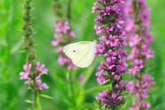Butterflies In Flowers Stock Photos