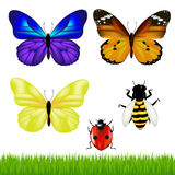 Butterflies And Insect Set. Vector. 3 Butterflies And Set From Ladybird, Of Bee And Green Grass Stock Photos