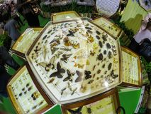A butterflies and insects taxidermy in a Hexagon glass box displaying at a entomology exhibition. BANGKOK, THAILAND. – On May 09, 2018 - A butterflies stock photography