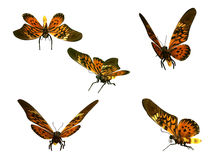 Butterflies, isolated on white background Stock Image