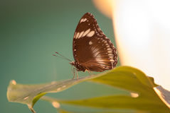 Butterflies and  lamp Royalty Free Stock Photography