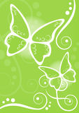Butterflies lime background Stock Photos
