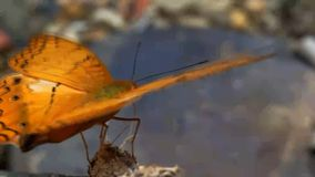 Butterflies are looking for food stock video footage