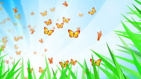 Butterflies stock video footage