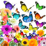 Butterflies magic world Royalty Free Stock Photos