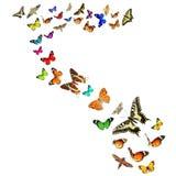 Butterflies magic world Stock Photography