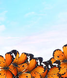 Butterflies magic world Stock Image