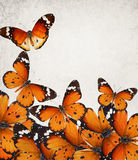 Butterflies magic world Royalty Free Stock Photography