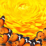Butterflies magic world Stock Image
