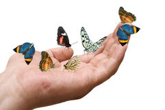 Butterflies on male hand Stock Photo