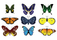 Butterflies. Many type of colorful butterflies  on the white background Stock Image