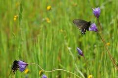 Butterflies in meadow stock image