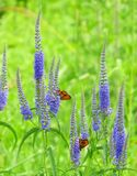 Butterflies on a meadow Stock Photo