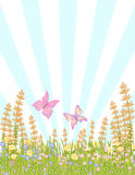 Butterflies in meadow flowers Stock Photography