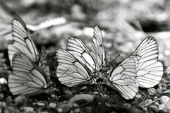 Butterflies meeting Stock Images