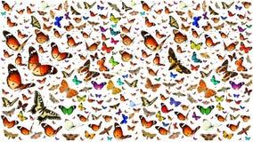 Butterflies migrating flight