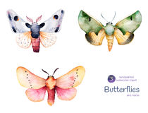 Butterflies and moths. Royalty Free Stock Photo