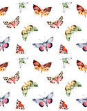 Butterflies and moths on white texture. Royalty Free Stock Images