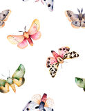 Butterflies and moths on white texture. Royalty Free Stock Photo