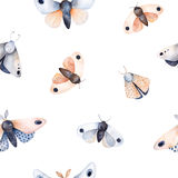 Butterflies and moths on white texture Royalty Free Stock Photography