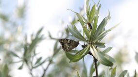 Butterflies in a mountain nature green trees plant, flower, animal. Butterflies in a mountain nature flora, yellow, graphic, colorful, eco, fossil natural stock footage