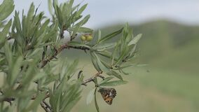 Butterflies in a mountain nature green trees plant, flower, animal. Butterflies in a mountain nature flora, yellow, graphic, colorful, eco, fossil natural stock video footage