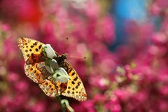 A beautiful butterfly on an orange background, sitting and resting. Butterflies from my garden are beautiful, they have nice colors and interesting backgrounds stock images