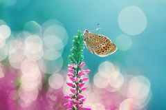 A beautiful butterfly on an orange background, sitting and resting. Butterflies from my garden are beautiful, they have nice colors and interesting backgrounds royalty free stock photo