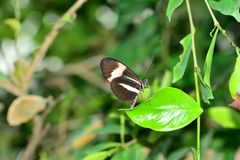 Black butterfly yellow spotted in the zoo royalty free stock photo