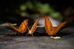 Butterflies, nature Stock Image
