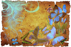 Butterflies on old vellum. With spot and rift Stock Photography