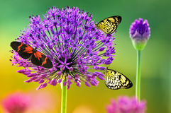 Free Butterflies On Colorful Flower Stock Image - 24390931