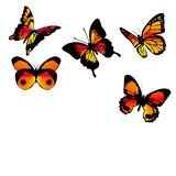 Butterflies orange. Ornamental orange-red-yellow butterflies on a white background Royalty Free Stock Images
