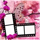 Butterflies and orchids flowers background  with film frame ( 1. Butterflies and orchids flowers  pink background  with film frame ( 1 of set Stock Images