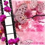 Butterflies and orchids flowers  pink background  with film fram Stock Photo