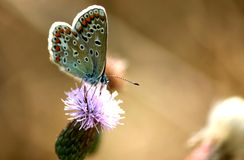Butterflies on pasture stock photography