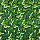 Butterflies Pattern Stock Photos