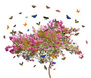 Butterflies and pink blooming tree Stock Images