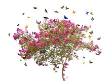 Butterflies and pink spring blooming tree Stock Photos