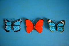 Butterflies red and blue decorative. Red and blue butterflies decorative on a blue background Stock Images