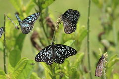 Butterflies resting in the park Stock Photo