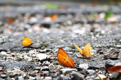 Butterflies. On the road Royalty Free Stock Photos