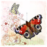 Butterflies and roses Stock Image