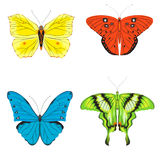 Butterflies set. Set of four butterflies on a white background Royalty Free Stock Photography