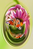 Butterflies sitting on flowers, in a capsule stock photo